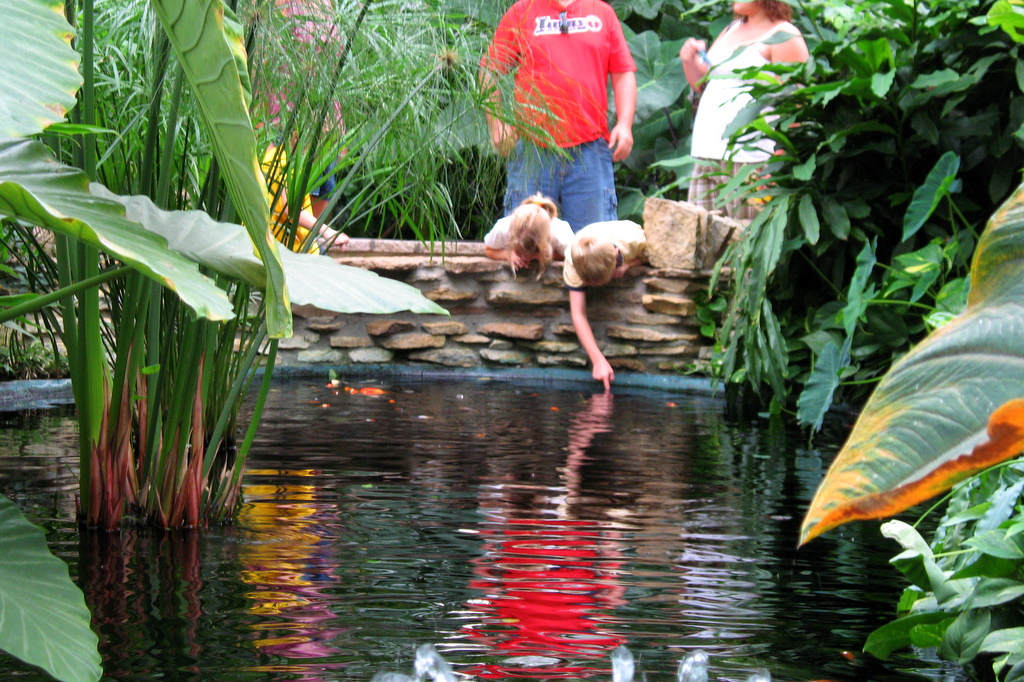 One of the ponds in the Conservatory at Como Park. Where there is water, you'll often find kids playing in it.