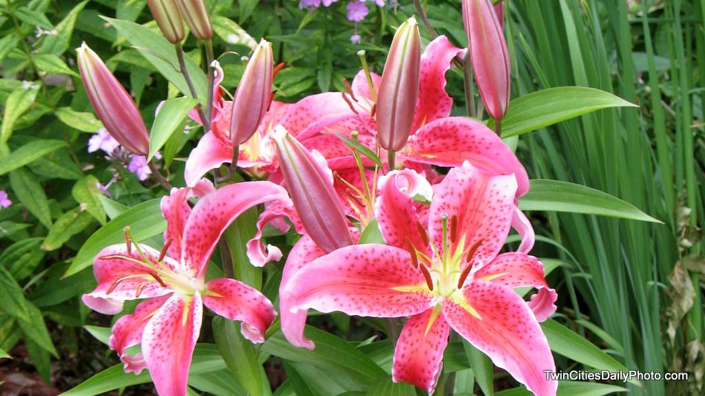 Garden Flowers garden flowers names design | home design ideas