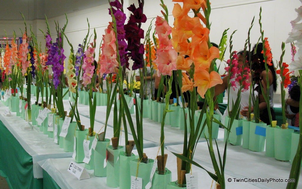 From the Horticulture building, every year they have flower contest for several different flowers. These are the Gladiolus contest, I believe they are judged on their looks, purity, hybrids, but it always appears to be just one stem of the flower for the judgement.