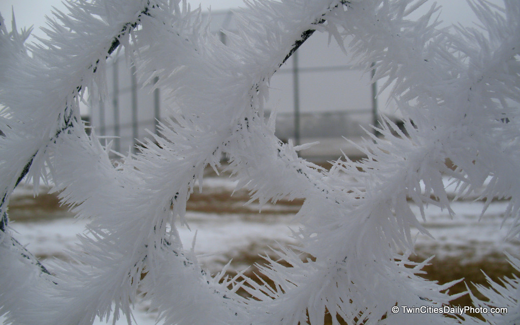 I wanted to give you a close up of the 'Frozen Frost' photo I posted yesterday. While I didn't walk over to the trees, I did get a close up of the chain link fence. Look at how long the frost has become, it looks like animal fur.